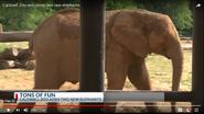 Caldwell Zoo Elephant