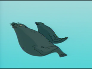 TWT Harbor Seals