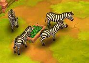 Plains-zebra-zoo-2-animal-park
