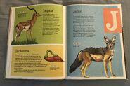 The Dictionary of Ordinary Extraordinary Animals (23)