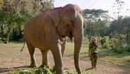 Dodo Heroes Indian Elephant