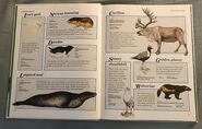 Macmillan Animal Encyclopedia for Children (2)
