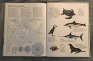 Macmillan Animal Encyclopedia for Children (38)