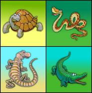 Reptiles erinv