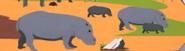 SP Hippos