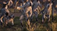 TLK 2019 Monkeys
