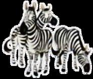 Zebra hugo safari pc
