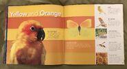 Animal Colors (Beth Fielding) (7)