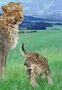 Leopard switch zoo