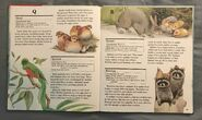 My First Book of Animals from A to Z (23)