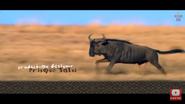 Elephant Tales Wildebeest