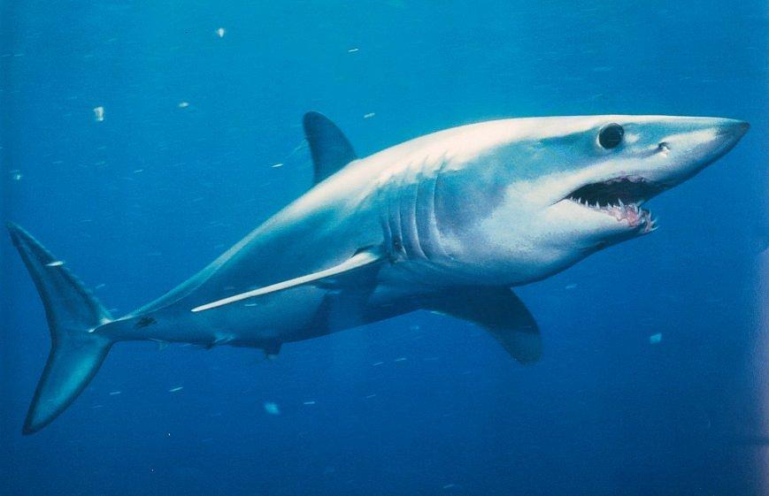 mako shark the parody wiki fandom powered by wikia