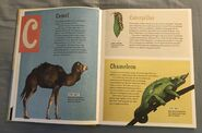 The Dictionary of Ordinary Extraordinary Animals (8)
