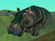 Zt2-hippopotamus