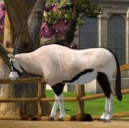 Arabian-oryx-wildlife-park-2