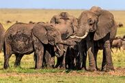 Elephants at A Mudspot