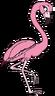 Franny the Flamingo