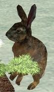 Rabbit-wildlife-park-2
