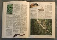 The Kingfisher Illustrated Encyclopedia of Animals (86)