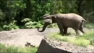 UTAUC Elephant 5