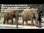 Wildlife Elephants