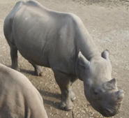 Cleveland Metroparks Zoo Rhino
