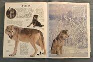 DK Encyclopedia Of Animals (168)