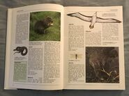 The Kingfisher Illustrated Encyclopedia of Animals (2)