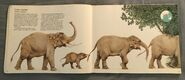 Kenneth Lilly's Animals (6)