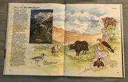 Macmillan Animal Encyclopedia for Children (31)
