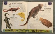 Reptiles and Amphibians Dictionary (15)