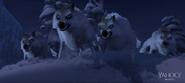 Wolvesfrozen