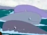 DTE Sperm Whales