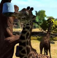 Masai-giraffe-zootycoon3