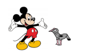 Mickey Mouse meets Rock Dove