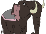 Oliver the Asian Elephant