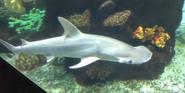 Columbus Zoo Shark