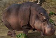 Hippopotamus-wildlife-park-2