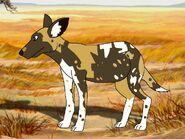 Rileys Adventures African Wild Dog