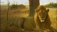 SRNGTI Lion