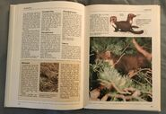 The Kingfisher Illustrated Encyclopedia of Animals (96)