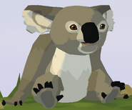 New South Wales Koala WOZ
