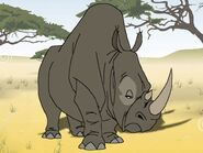 Rileys Adventures Southern White Rhinoceros