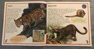 Animals of South America (2)