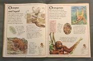The Kingfisher First Animal Encyclopedia (47)
