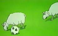 Zoo-cup-039-sheep