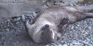 Buffalo Zoo Otter