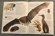 DK Encyclopedia Of Animals (18)