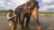 Deadly 60 Elephant