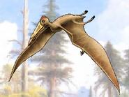 Dm pterodactylus